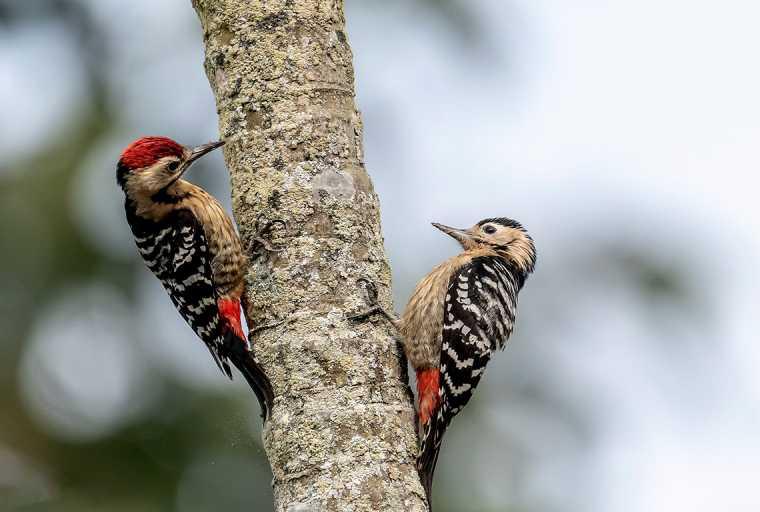 Bird Watching Tour In Kathmandu