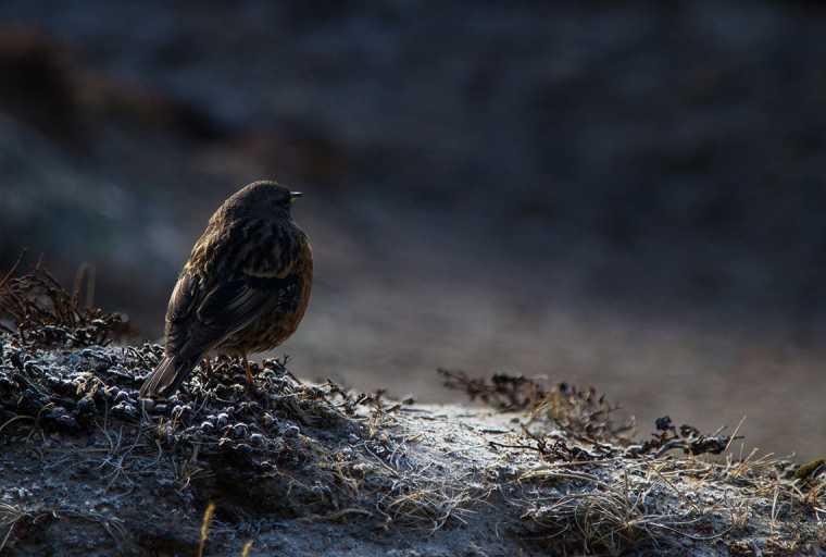 Chitwan Bird Watching Tour